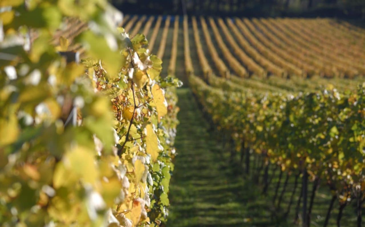 From Social Media To Speed-picking, How Vineyards Are Saving Their Harvests During Lockdown photo