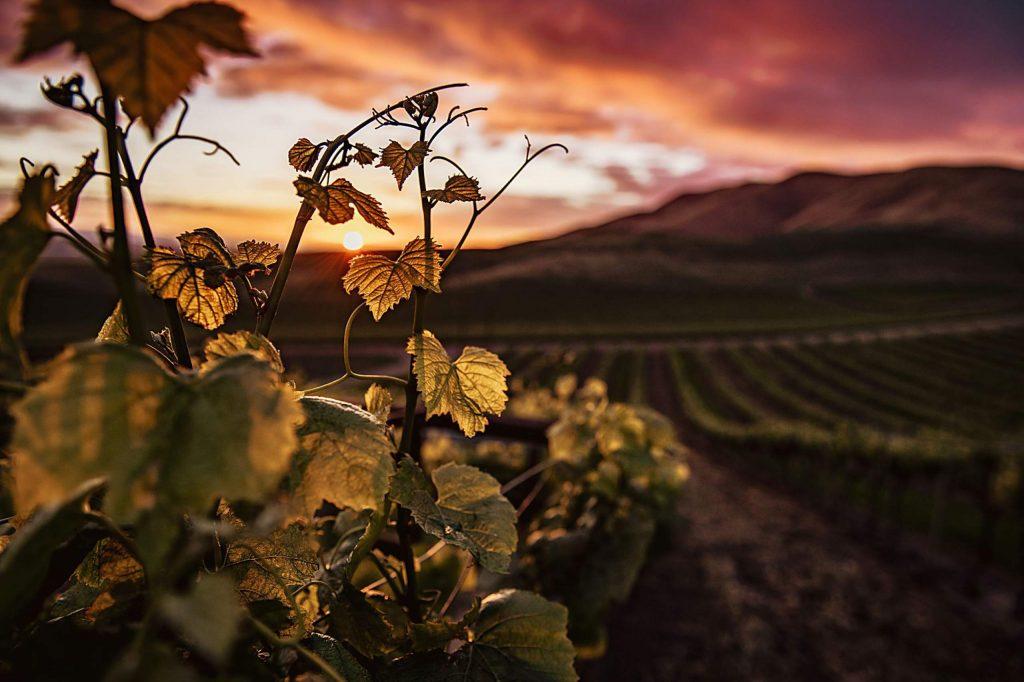 El Dorado County Wineries Offer Virtual Tastings, Food Classes, Discounted Wines photo