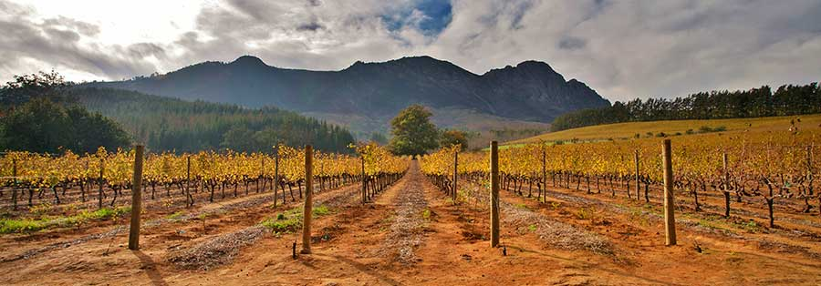 Blended to Perfection from Stellenbosch and Durbanville photo