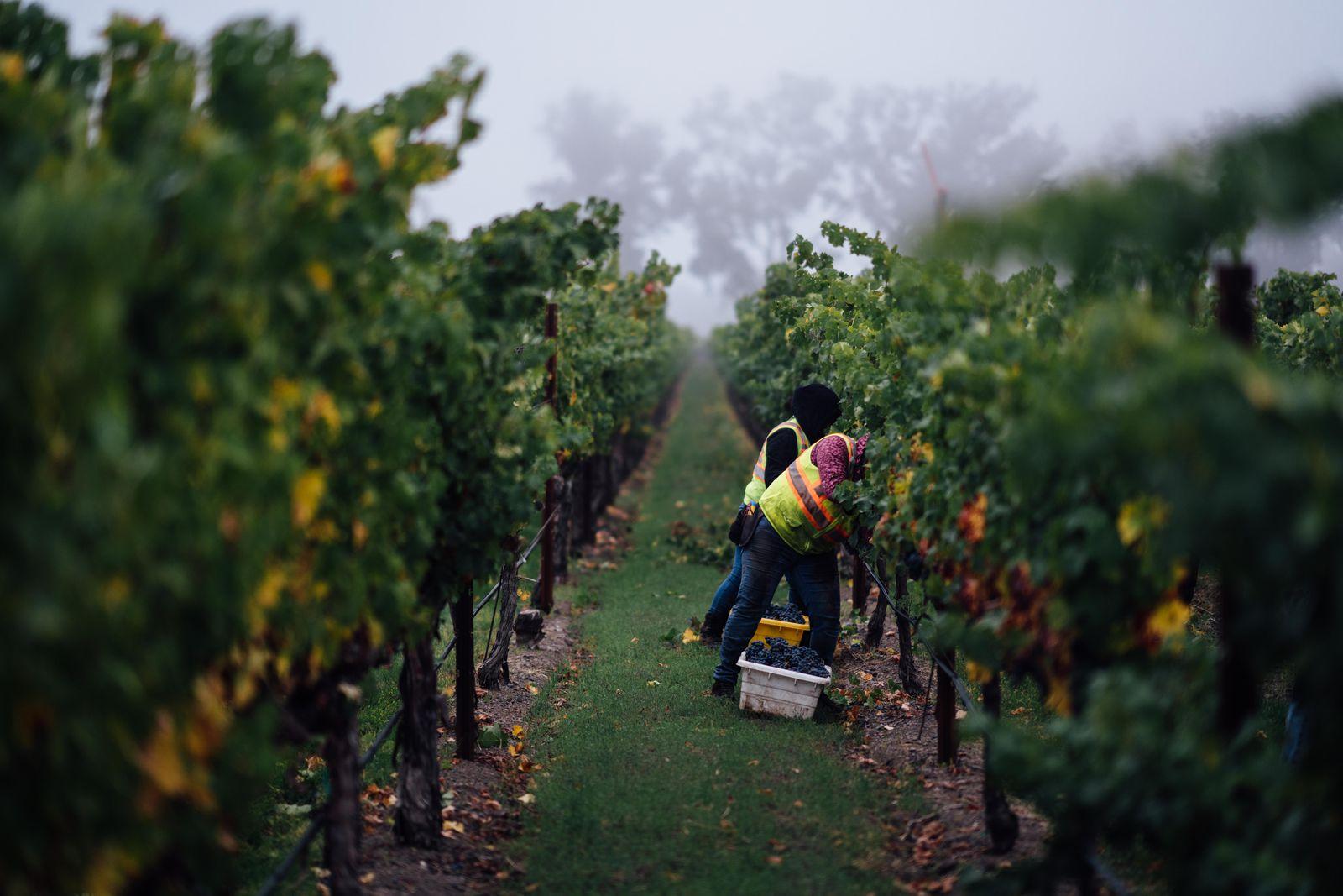 These California Wineries Are Hosting Virtual Wine Tastings photo