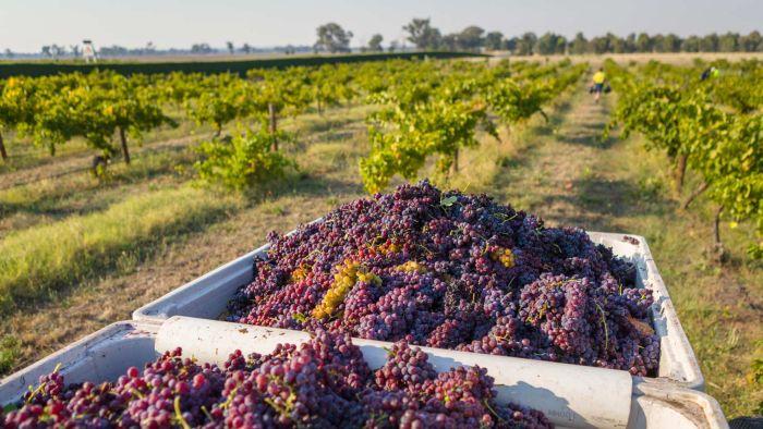 Victorian Wineries Want Cellar-door Tasting Over Long Weekend photo