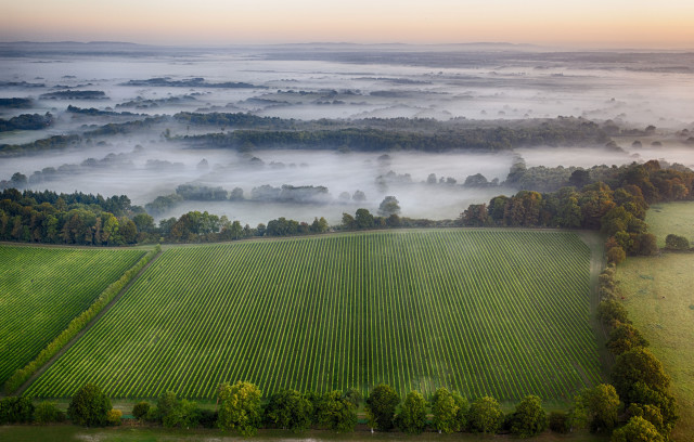 Nyetimber Starts Vineyard Expansion Project photo