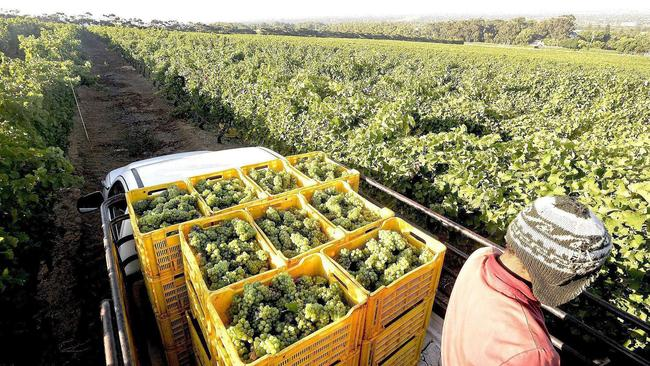 Covid-19 In Sa: 'wine Industry Was Losing R500m Every Week' photo