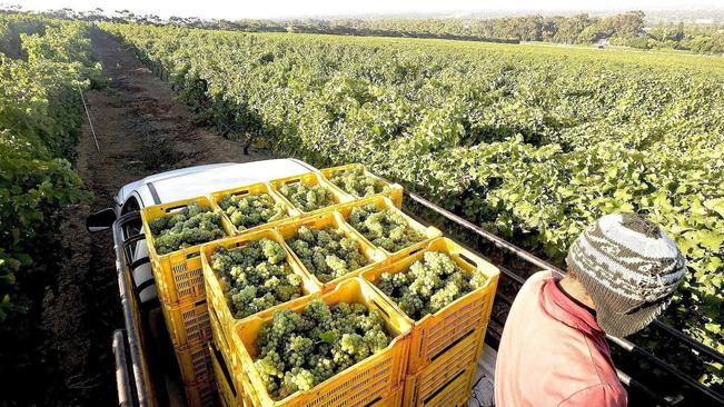 Hope For Sa's Wine Industry As Government Pours In R6 Billion In Short-term Assistance photo