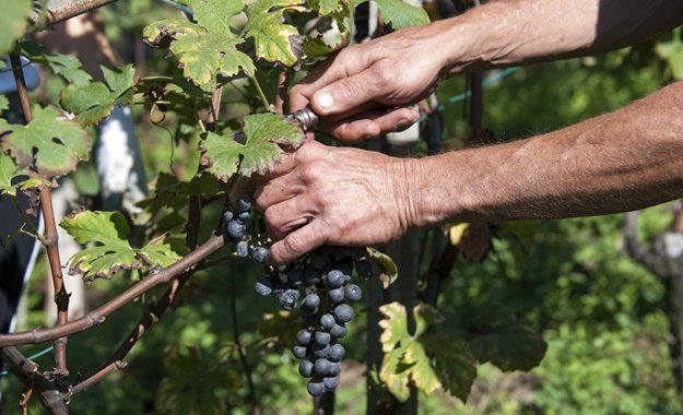 Sa Wine Producers 'fearful And Frustrated', Losing R300 Million Per Week photo