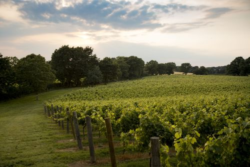 7 Fine Fizzes To Celebrate English Winemakers photo