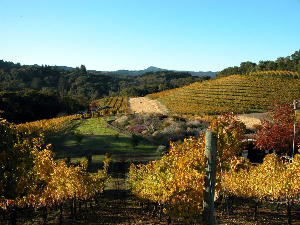 Wine, Etc.: Benzigers Turned An Abandoned California Ranch A Center Of Biodynamic Wine photo