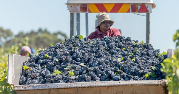 Lockdown Level 3: Sa Wine Prices Set To Drop photo