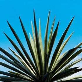 How Acquisitions Could Affect The Mezcal Category photo