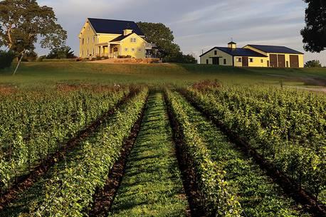 Wine & Dine: Mercator Vineyards photo