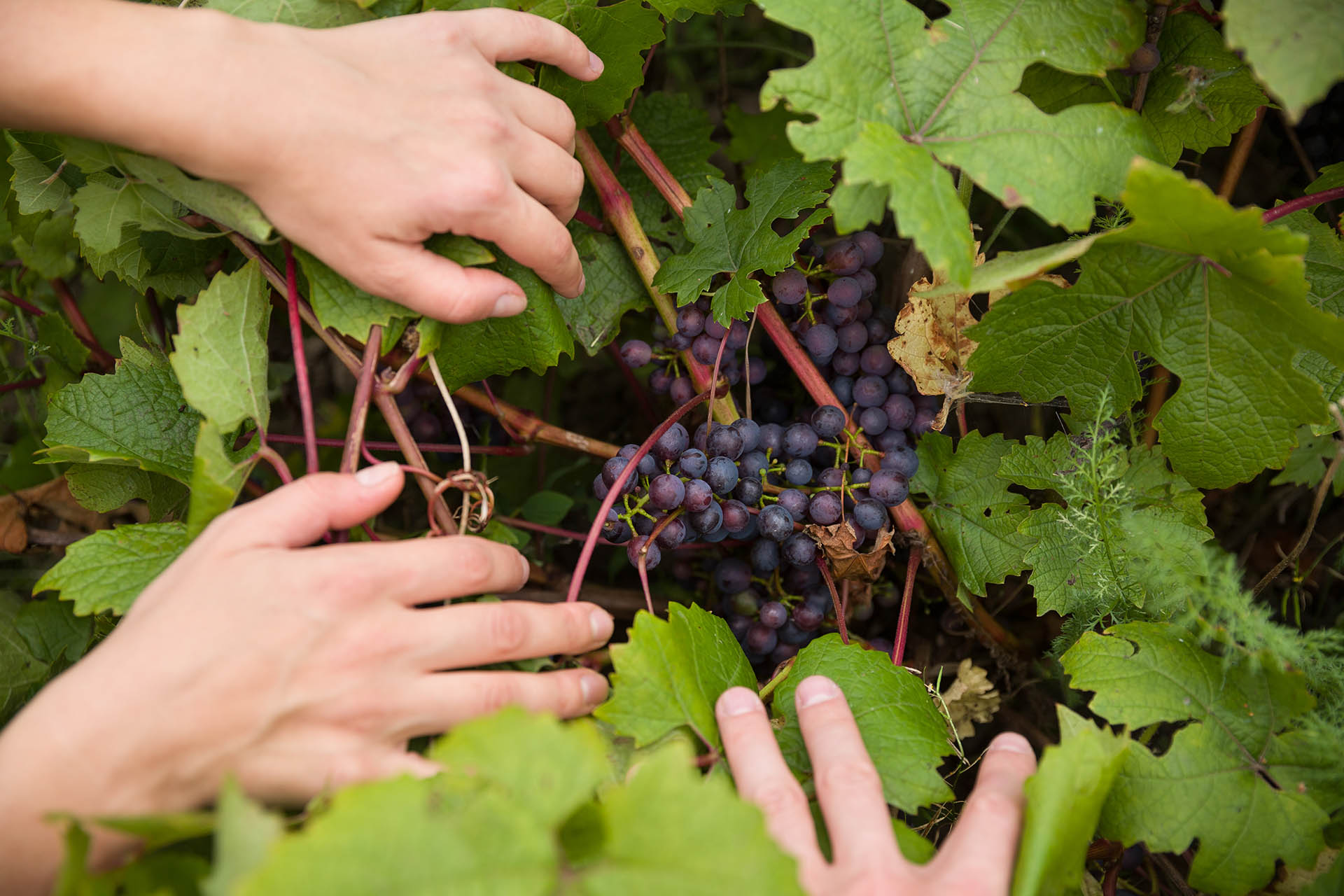 South African Organic Wine Needs To Step-up Its Game photo