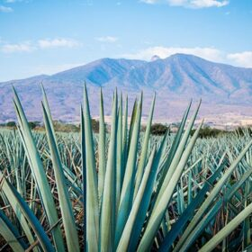 Tequila Brands Pushing The Boundaries Of Sustainability photo