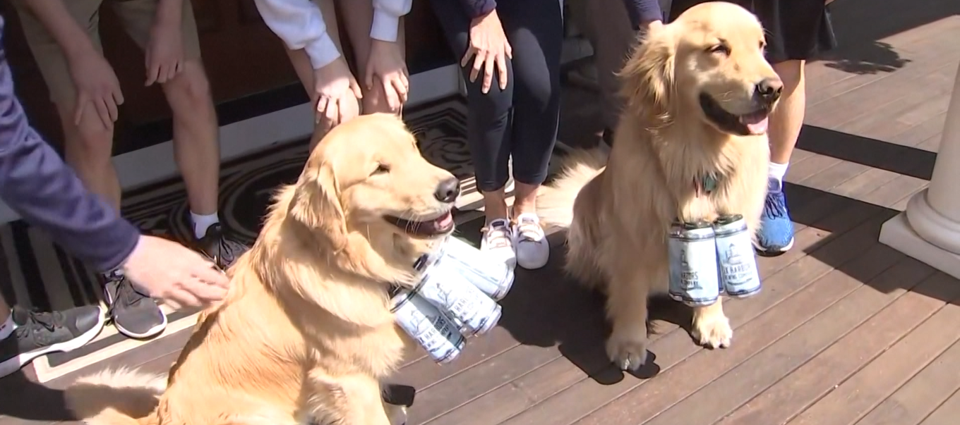 Dogs Deliver Beer To New York Brewery Customers photo