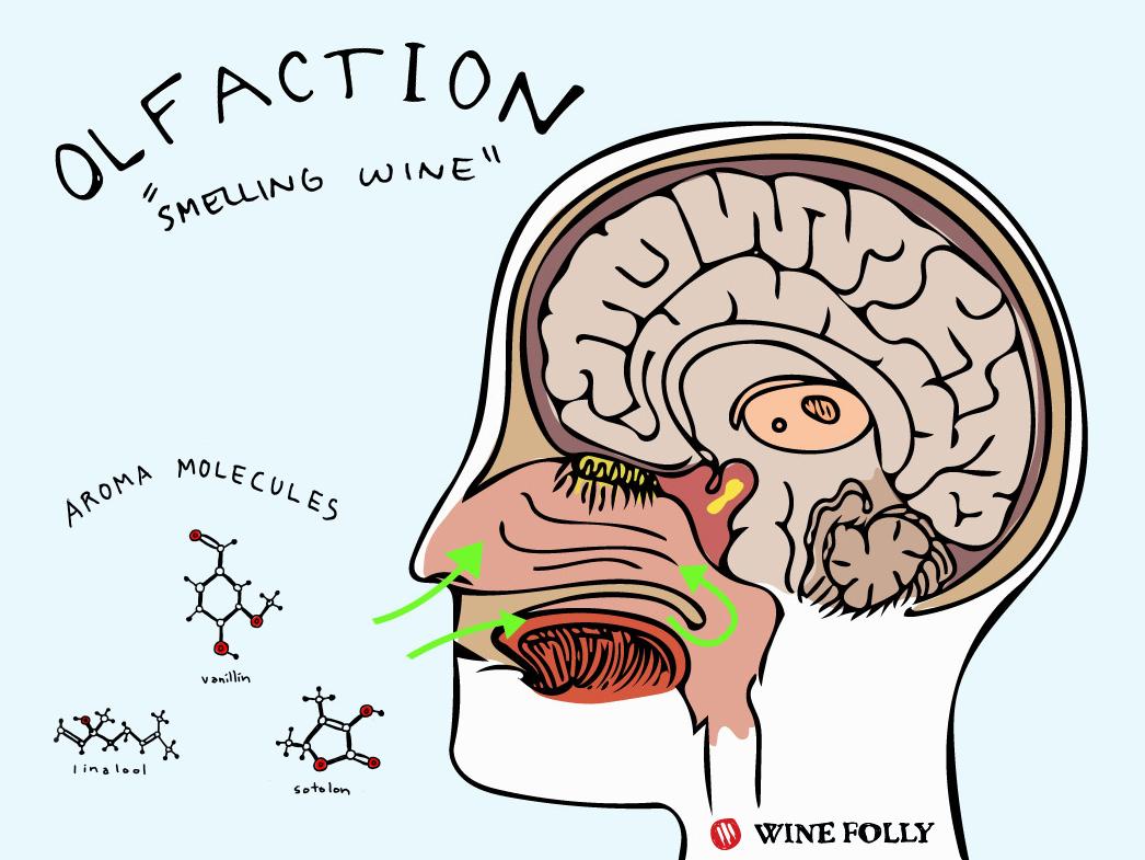 Some Nifty Science To Help You Identify Wine Aromas photo
