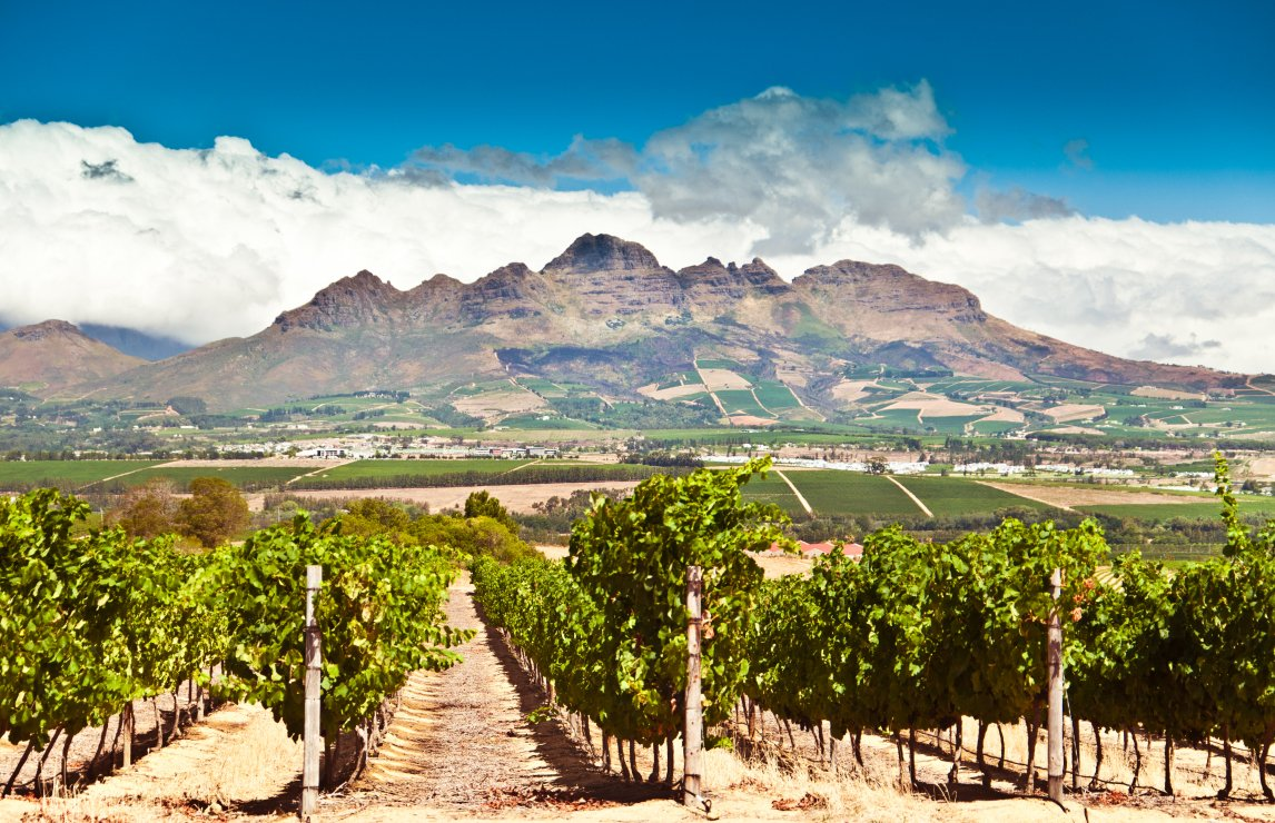 Wine Trade Rallies Around South Africa In New Campaign photo