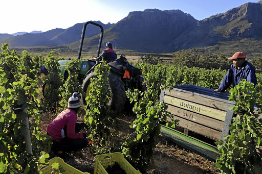 Lockdown In The Winelands Of South Africa photo
