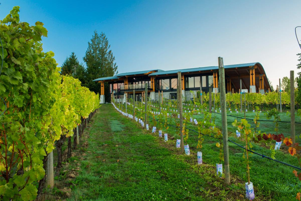 Blue Grouse Winery Announces Hq Wine + Spirits As New Vancouver Sales Agency photo
