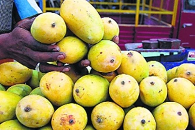After A Welcoming Response In Uk, Wine Made From Ratnagiri Mangoes Will Now Be Served In Eu,russia photo