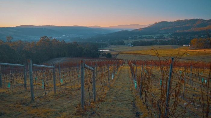 Tassie Wine Regions Destined To Resemble Coonawarra, Climate Research Shows photo