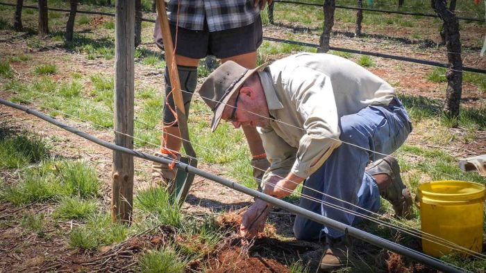 Rain, Hotter Days In The Decades To Come Prompts Winemakers To Change Practices photo