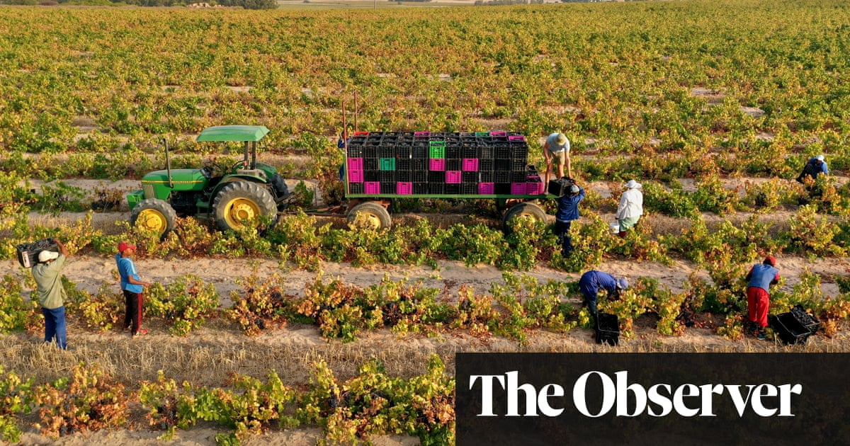 Modern Wines Bring Cinsault To The Fore photo