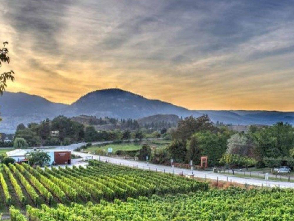 Anthony Gismondi: B.c. Wine Of The Week, Wine To Cellar And Calendar Items photo