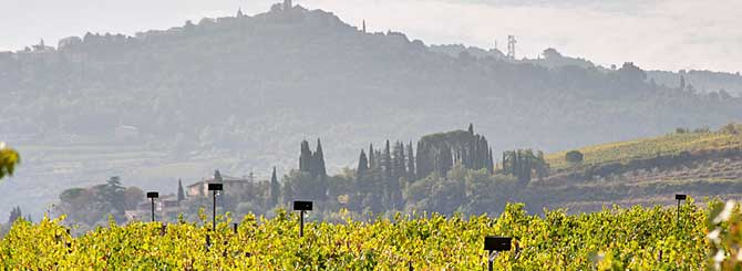 Brunello 2015: Another Perfect Vintage photo