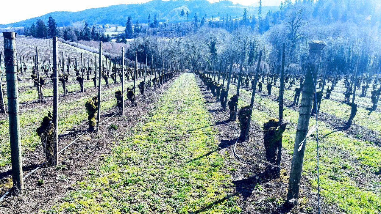 Willamette Valley Wine Map Gets 2 New Grape-growing Regions: Tualatin Hills, Laurelwood District photo