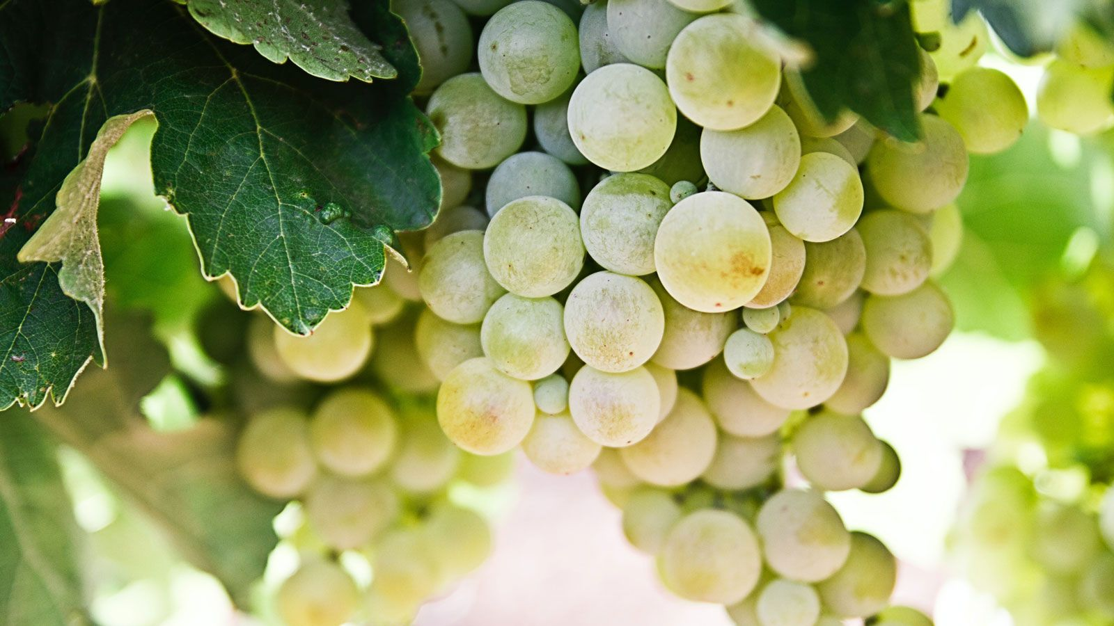 The Best Riesling Wine For 2020 photo