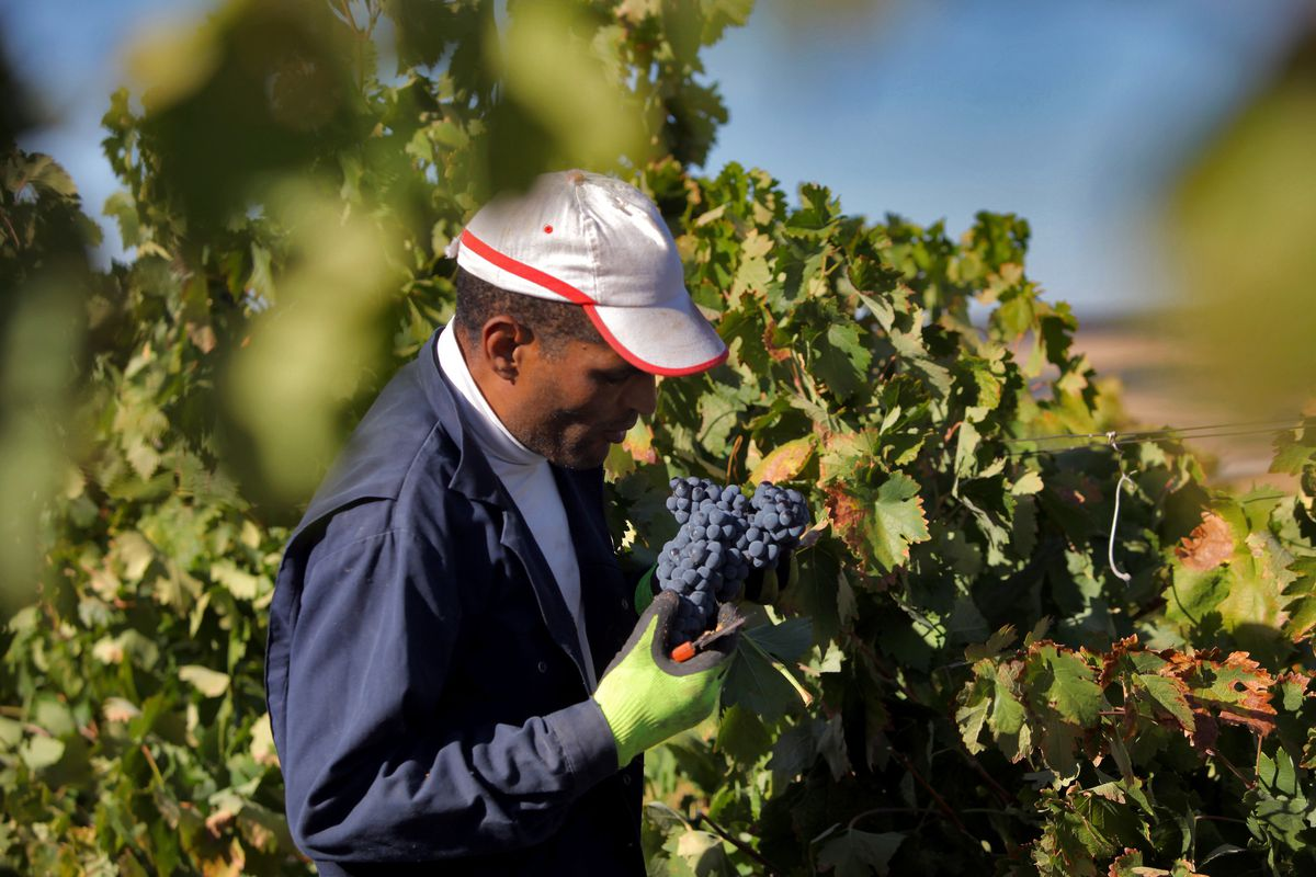 Wine: Moro Reds And And White Godellos Are A Treasure Worth Searching Out photo