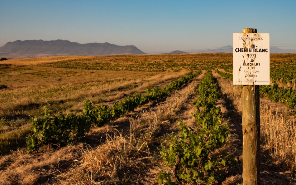 Prescient Cape White Blend Report 2020: Top 10 photo