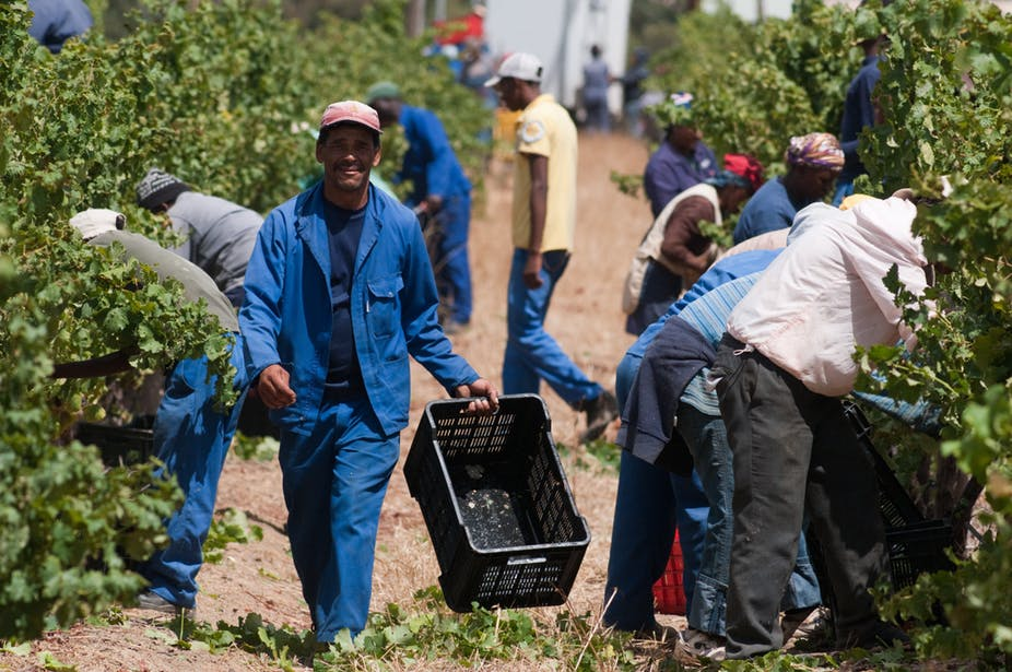 Alcohol Ban In South Africa Resulted In 18 000 Job Losses In The Wine Industry photo