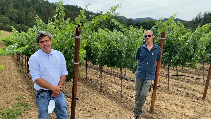 In The Vineyard At Inglenook: Cabernet Canopy Control photo