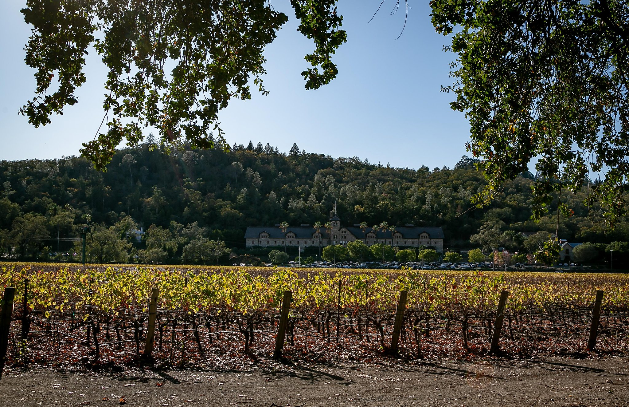 Charles Krug: Drink In The History At Napa's Valley's Oldest Tasting Room photo