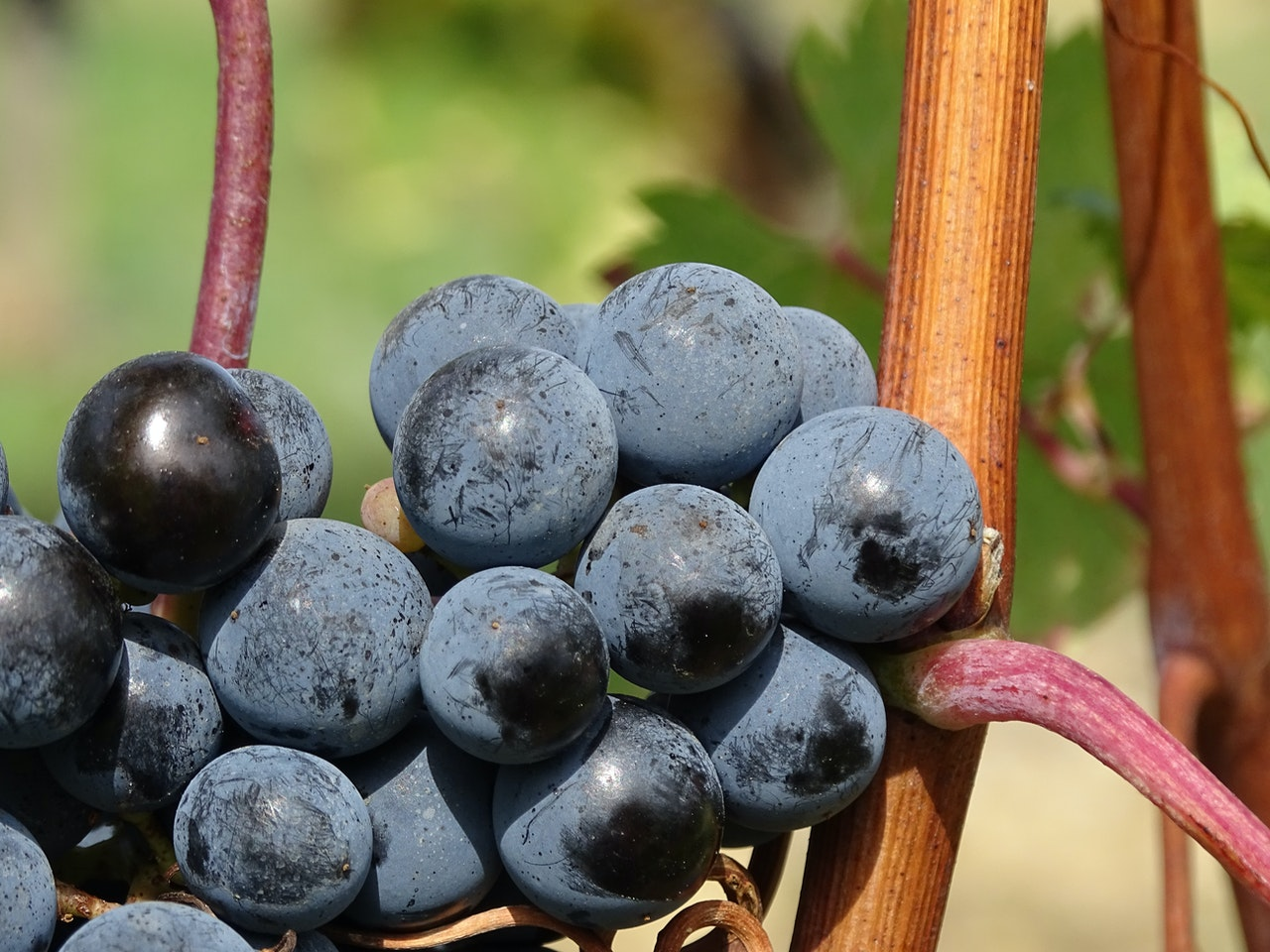 Comparing Wines Made From Tempranillo Grapes photo
