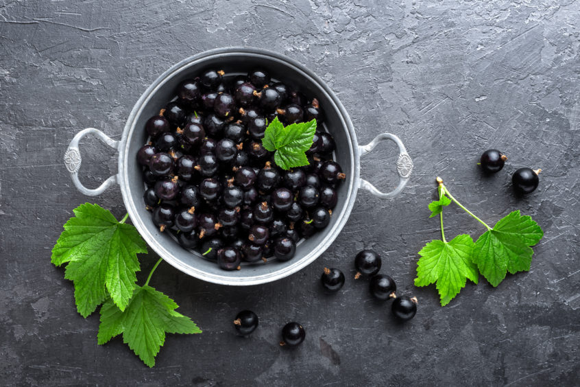 Amber Lights: Blackcurrants From Courier Country Farms Play Their Part In Global Drink Company photo