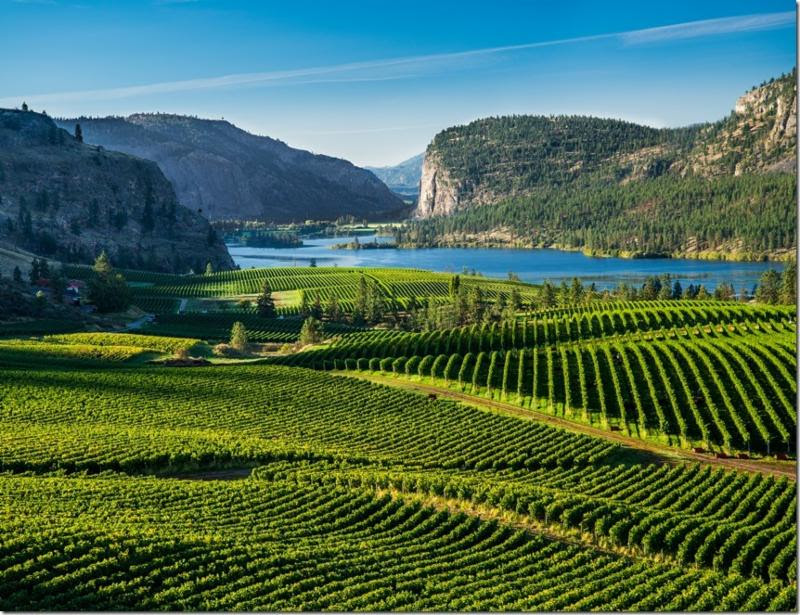 Bring Blue Mountain's Tasting Room Home With Premium Wine Packs And Videos photo