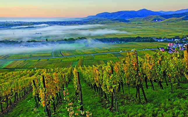 South Africa's On-premise Wine Trade Faces Challenging Times photo