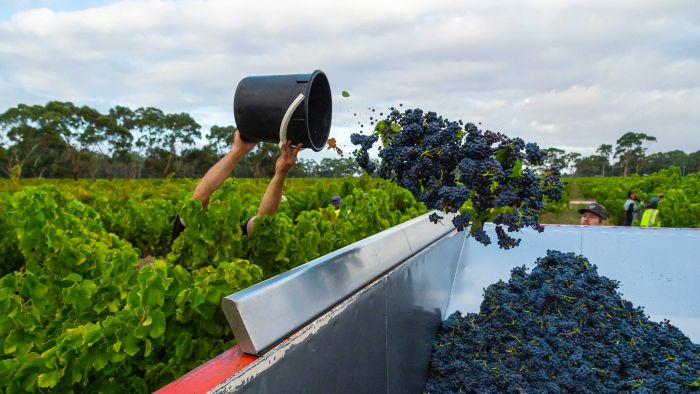 State Of Terroir: 2020 Vintage Could Crush Wine Producers photo