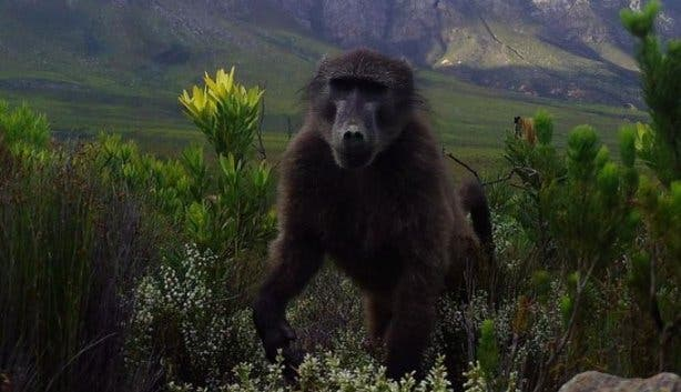 There's More Animal Life In Cape Town Than You Think photo