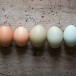 Why American Eggs Are Different From The Rest Of The World photo
