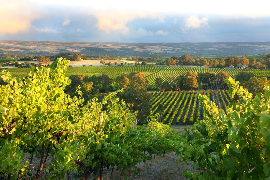 Australian Wine: How Can The Industry Navigate Its Way Through The Pandemic? photo