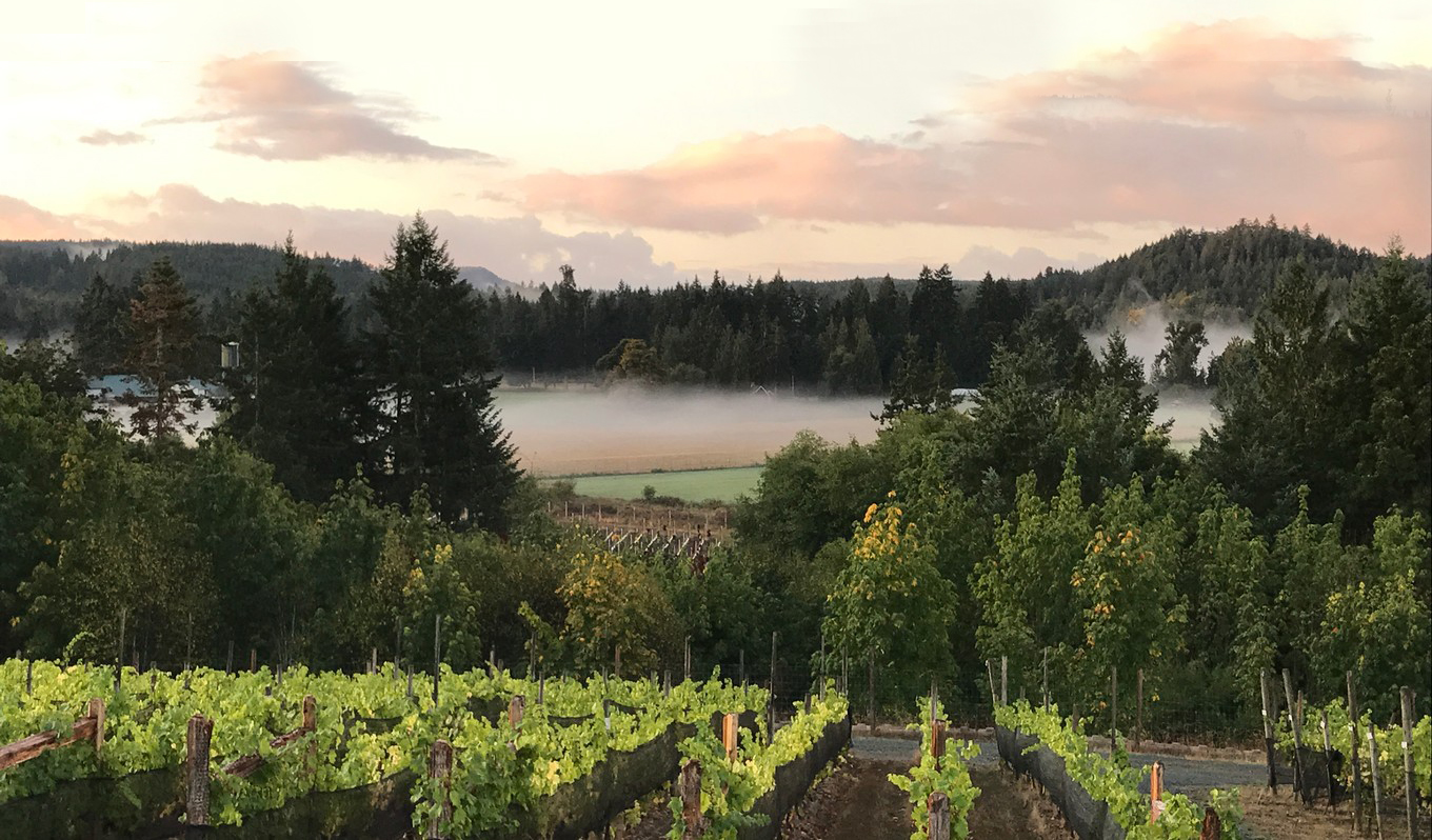 New Wine Producing Region Recognized On Vancouver Island photo