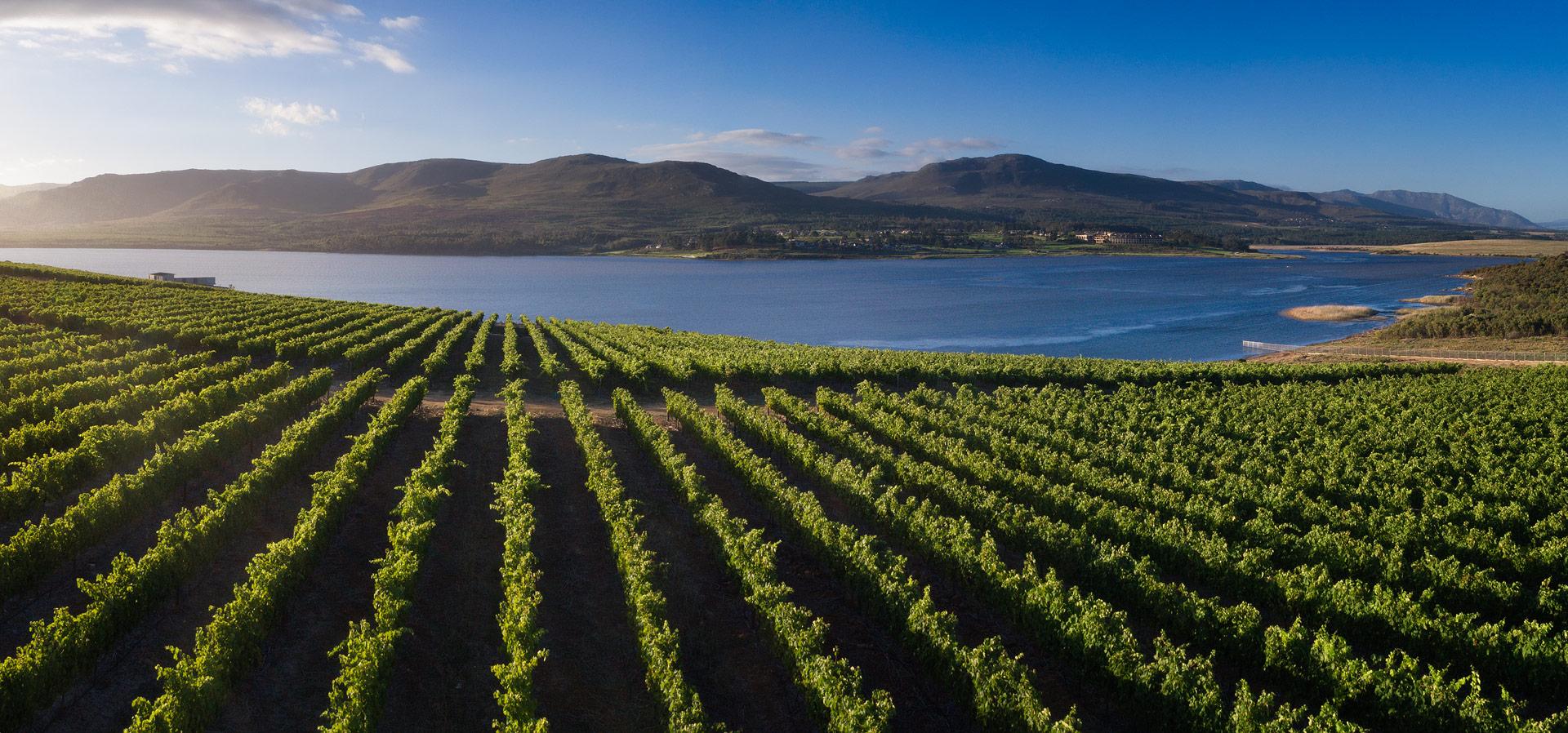 Beat the Lockdown Gloom – Wine Tastings go Online at Benguela Cove photo