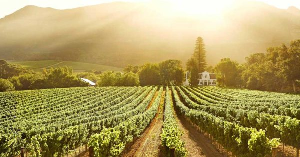'government Should Value Wine Industry More' photo