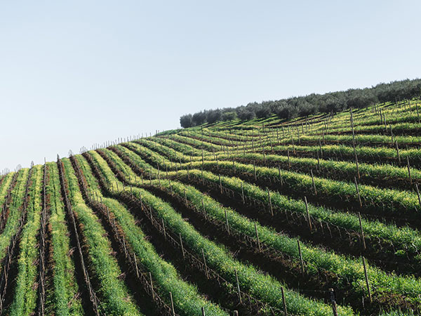 Here's Why Restaurants On Wine Farms Might Not Be Opening Right Now photo