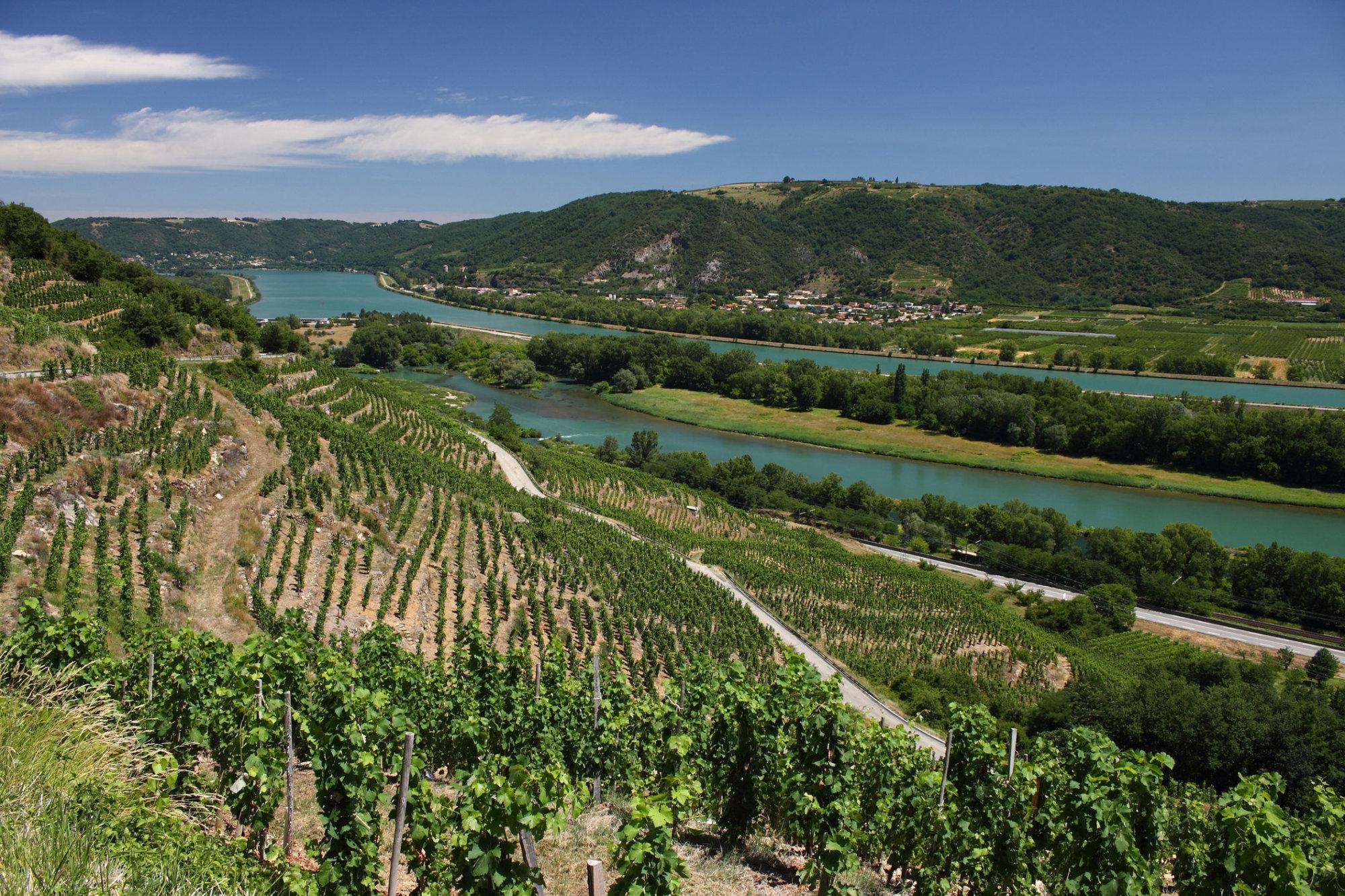 Wine Of The Week: Rhone Rangers Red Wines photo