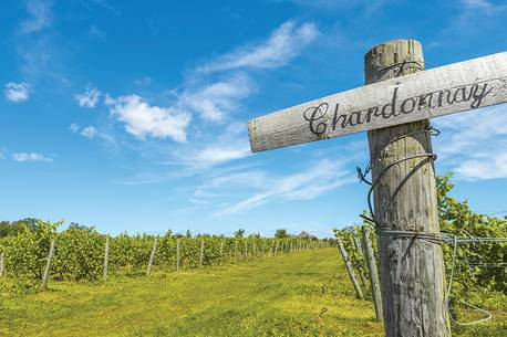 Wine & Wine: Take A Tour Of Nova Scotia Wine Country photo