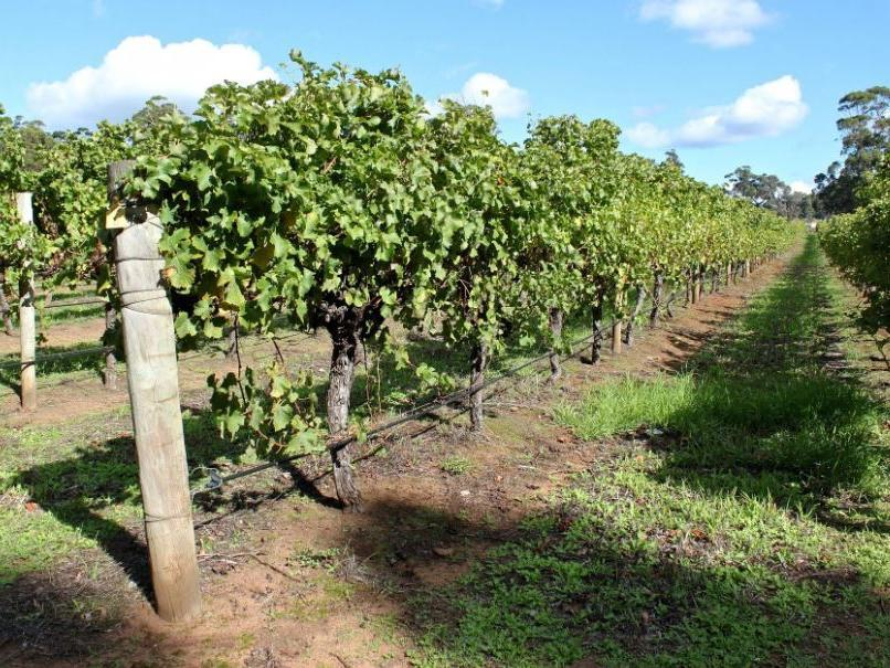 Tom Jones From The Whalley Wine Shop Reviews The Australian Wine Ranges photo