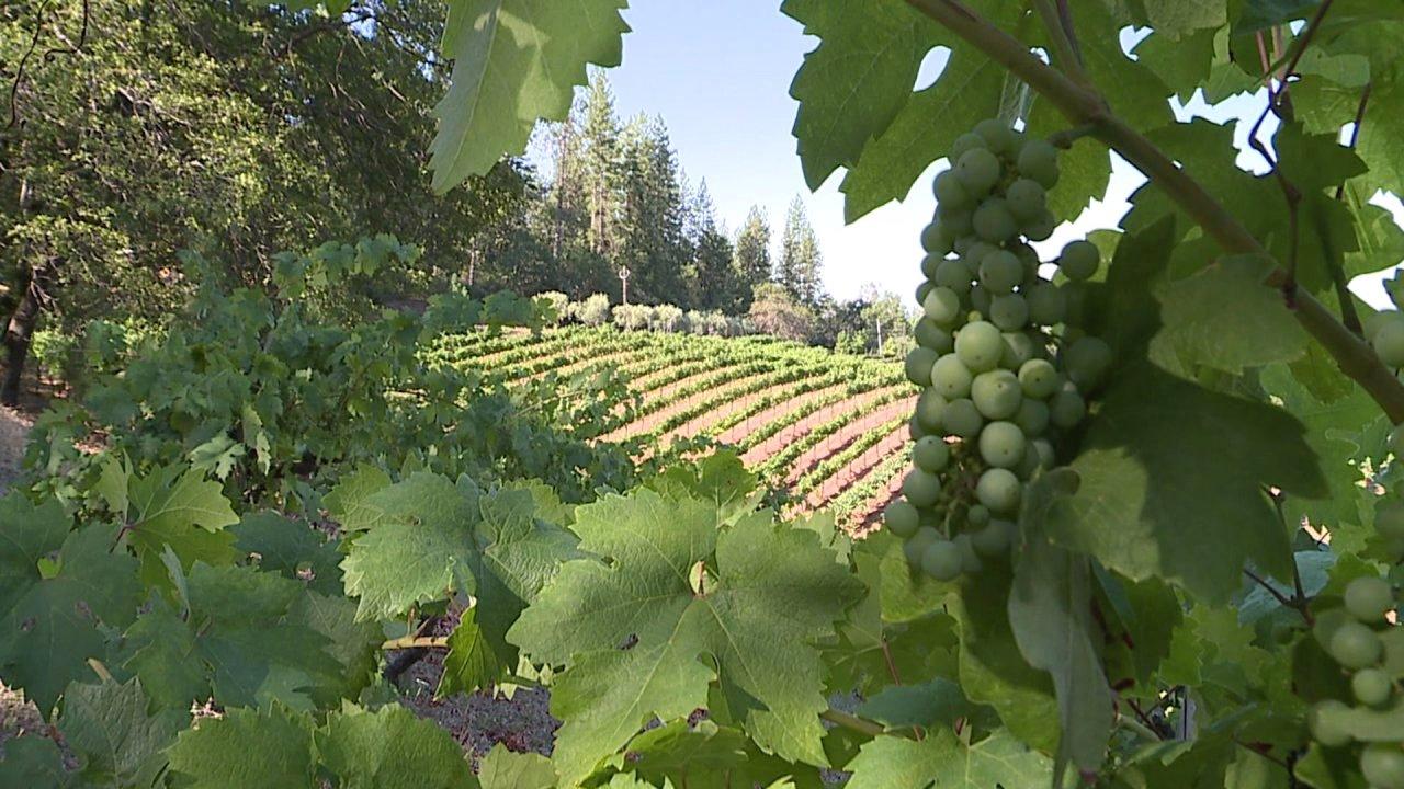 Destination California: Boeger Winery photo